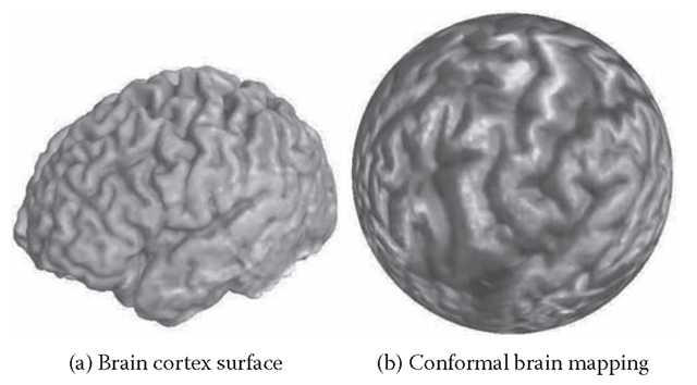 Conformal brain mapping. (a) A brain cortex surface, which is a topological sphere. (b) The spherical conformal mapping of (a) onto the unit sphere.