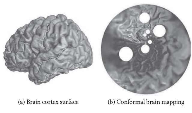 Conformal brain mapping with landmarks. (a) A brain cortex surface with landmarks, which is a genus zero surface with boundaries. (b) The circular conformal mapping of (a) onto the unit disk.
