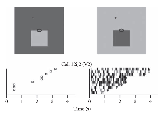 Selectivity for edge contrast polarity. Responses of an example neuron of V2. The raster plots show the sequences of action potentials in response to repeated presentations of the stimuli depicted above (oval indicates receptive field). Small squares mark the end of the monkey's fixation period.