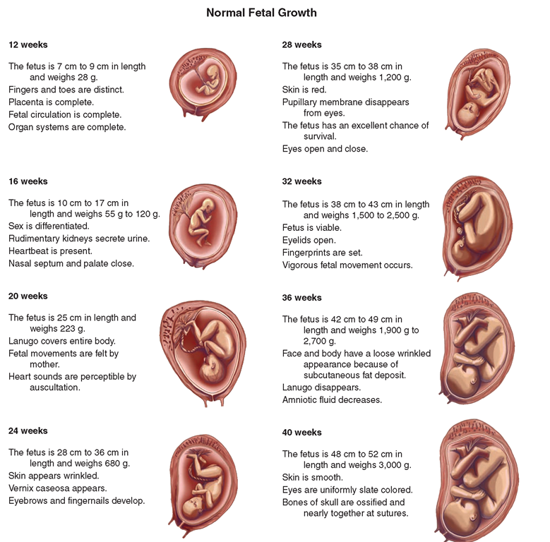 Normal Pregnancy (Maternal and Newborn Nursing) Part 2