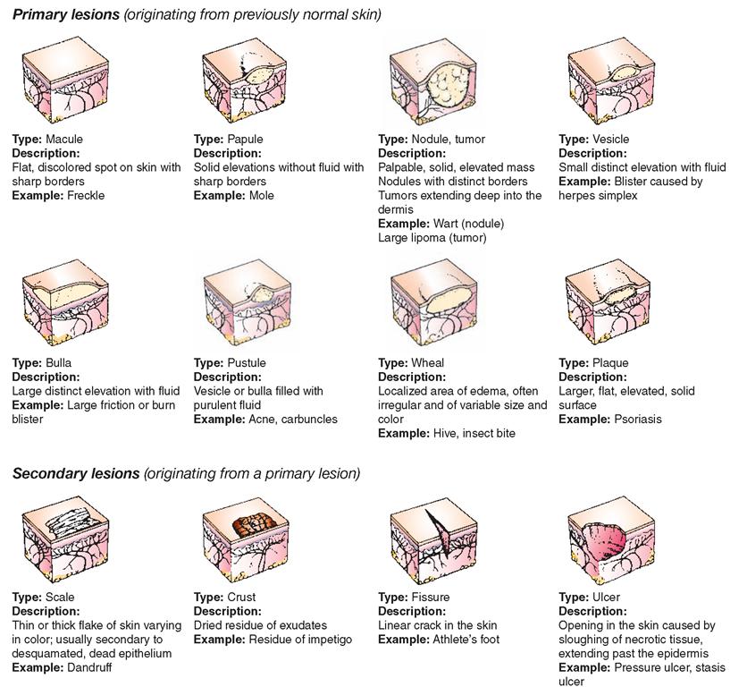 Dermatologists :: Job Description - MyPlan.com
