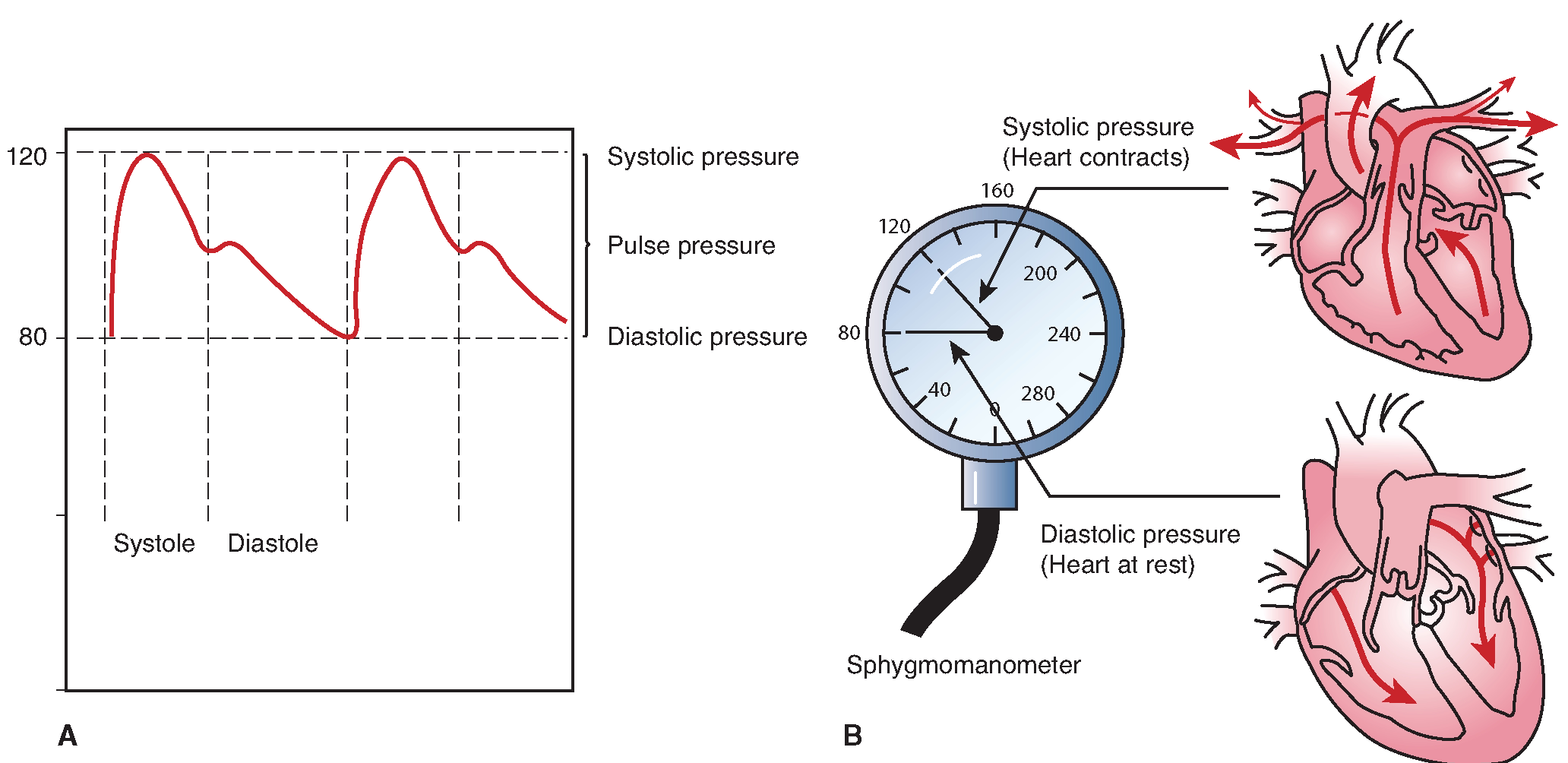 Pulse pressure: what is it 64