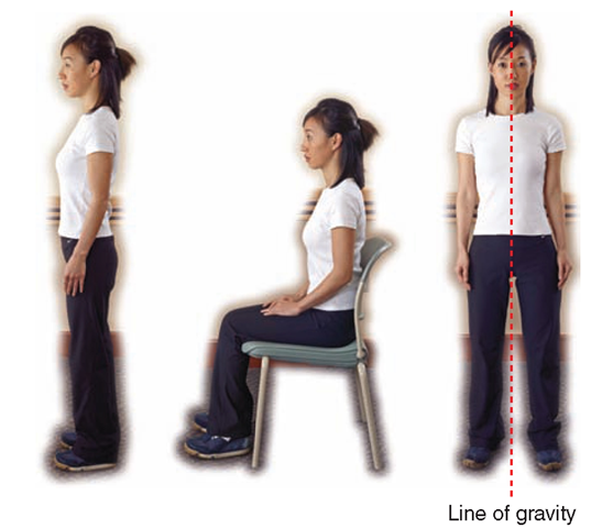 "When the body is held in proper alignment, the back is in a ""neutral"" position, with the curve of the lower spine intact."