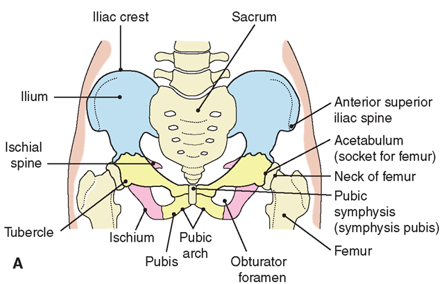 The Musculoskeletal System (Structure and Function ...