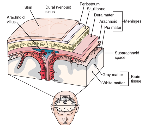 The Nervous System (Structure and Function) (Nursing) Part 3