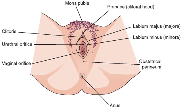 The Female Reproductive System Structure And Function Nursing Part 1
