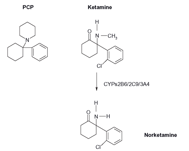 Structure of ketamine and its major demethylated derivative norketamine, alongside the structure of PCP