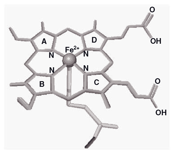 Main structural features of ferriprotoporphyrin-9, showing the iron anchored in five positions (pentacoordinate form). The cysteinyl sulphur holds the iron from below