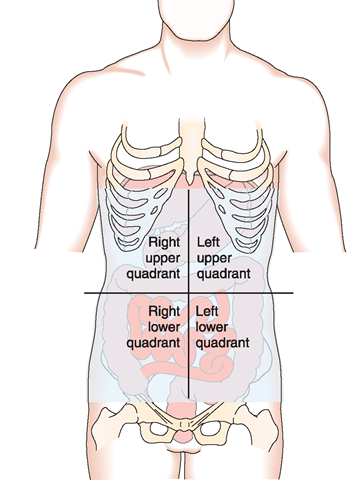Organization of the human structure and function nursing part 1 quadrants of the abdomen showing some of the organs within each quadrant ccuart Image collections